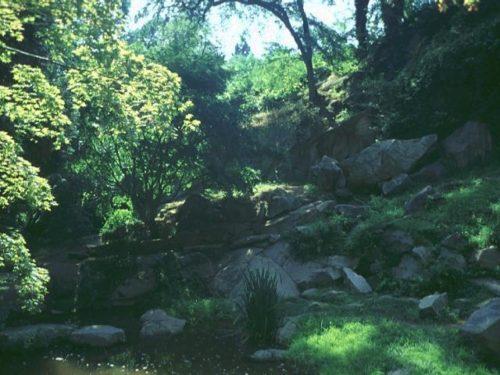 Trees & Plants 2742-001