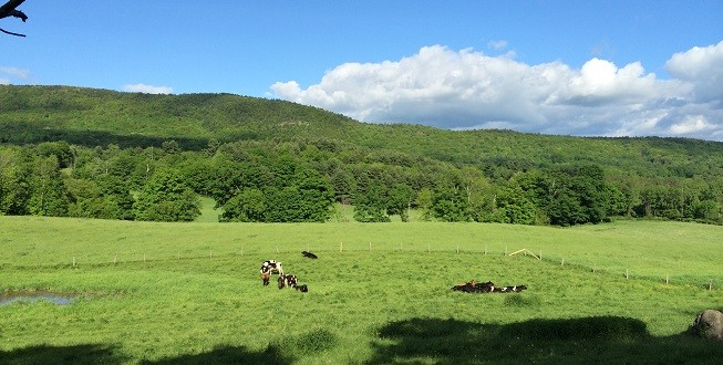 Summer in Alford Valley