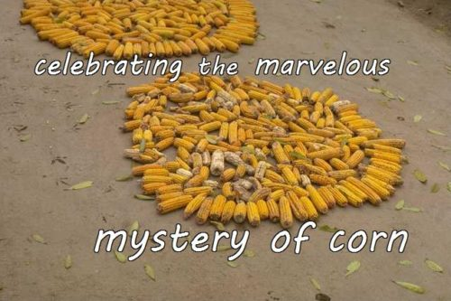 11-30 celebrating the marvelous mystery of corn